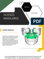HUESO MAXILAR