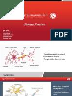 Sistema Nervioso Propedeutica (corregido) (1)