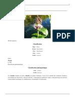 Menthe.pdf