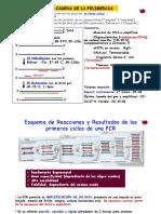 Tema 25.3- PCR-CV-14
