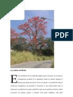 Los árboles de Mérida