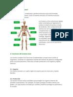 Qué es el sistema óseo