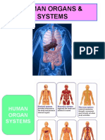 Meeting 8 - Human Organs & System (NERS 3)