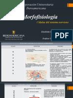 actividad 2 . Mofofisiología