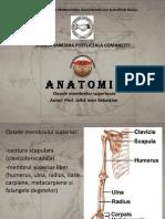Anatomie curs 3.2