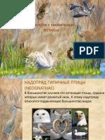 Типичные птицы.pptx