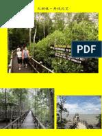 红树林.pptx