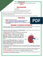 EVIDENCIA 4 LA EXCRECION.docx.pdf