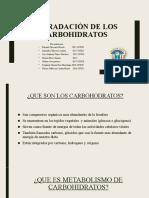 metabolismo carbohidratis