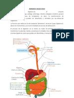 aparato digestivo y respiratorio