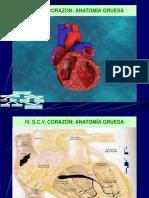 cardiovascular.pdf