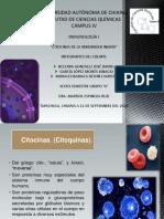 citocinas de la inmunidad innata.pdf