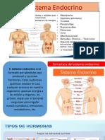 4to. sisstema endocrino (1)