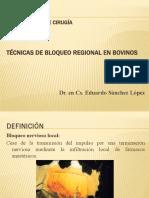 PPT Fundamentos de Cirugía - Anestesia local por bloqueo nervioso en Bovinos.pptx