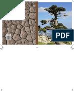 alberi monumentali_pollino