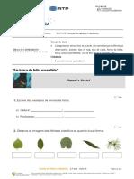 Estudo do Meio e Cidadania - aula 4 Plantas2