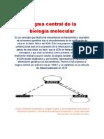 dogma central.docx