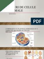 Tipuri de celule  animale.pptx