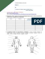 corps_humain-21148.docx