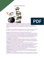 Niveles-de-Organizacion-de-Los-Ecosistemas