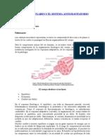 CADENAS MUSCULARES Y EL SISTEMA ANTIGRAVITATORIO