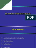 Noyau interphasique