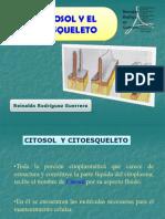 10. Citosol y citoesqueleto