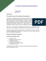 CADENAS MUSCULARES Y EL SISTEMA ANTIGRAVITATORIO II