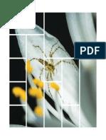 Atlas Flora y Fauna 4