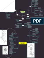 Mapa conceptual tema 11-1 tallo cerebral