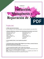 Cuestionario Traducción, Mutagénesis[913]