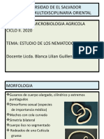 Nematodos intestinales y fitoparasitos