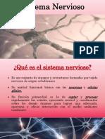 sistemanervioso PDF