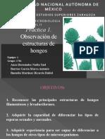 MICOLOGÍA (1).pptx