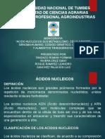 ACIDOS NUCLEICOS MONOGRAFIA