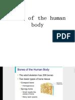 Bones of the hu-WPS Office