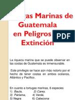 Tortugas flora y fauna Guatemala.pdf