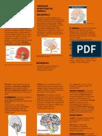 ACTIVIDAD 5 QUE TENGO EN MI CABEZA (1).pdf