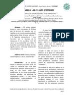 Cancer y las celulas efectoras.docx