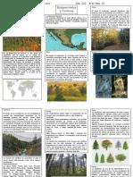 Bosque mixto y de Coníferas.docx