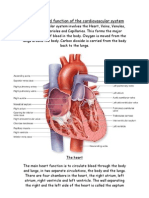 Structure and function of the cardiovascular system