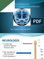 Diapositivas  Complementarias Sistema Nervioso.pptx