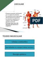sistema musculo esq. ESTUDIANTES