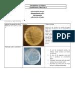 Laboratorios virtuales 2020-2 2.docx