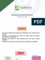 MECANISMOS DE ERUPCIÓN DENTARIA.ppt