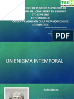 Metemorfosis de los insectos.pdf