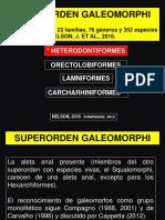 ORDEN ORECTOLOBIFORMES.pdf