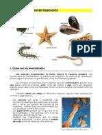 1. LOS ANIMALES INVERTEBRADOS - Dolmen de Soto.pdf