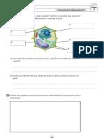 Naturales 5º ANAYA ampliación.pdf