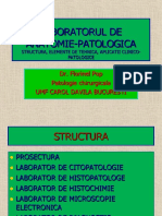 Tehnologie si coloratii AP 2013.ppt